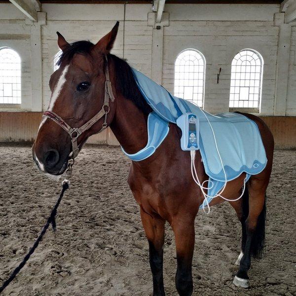 méregtelenítő kiegészítők lovak számára)